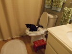 Toilet training Francis