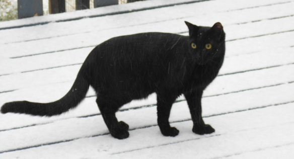 Francis in snow 2