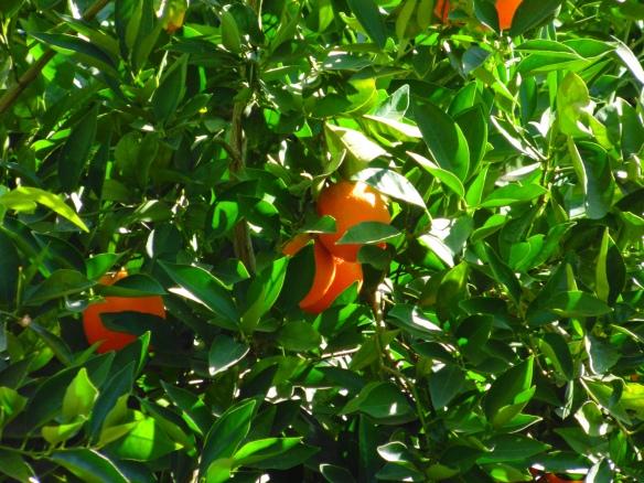 save orange
