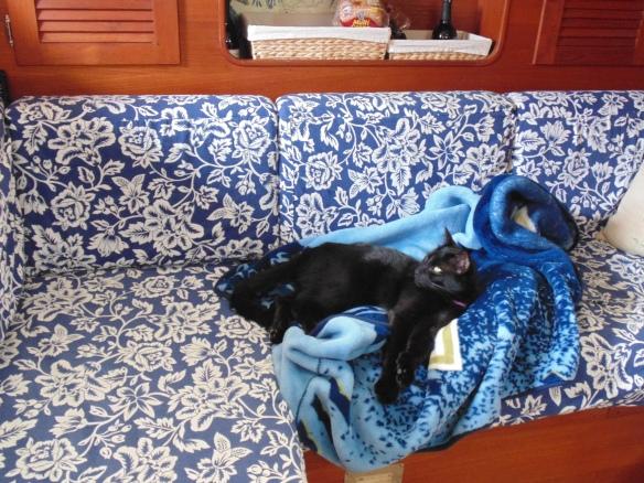 cozy kitty SNS