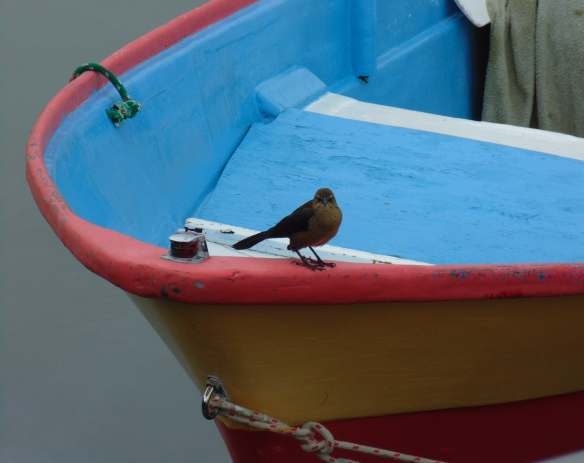 Bird on Panga