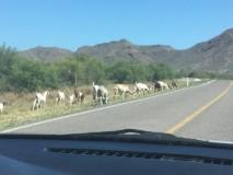 Driving to Loreto