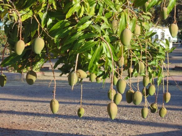Seize a Mango